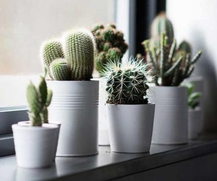 Bikin Rumah Makin Cantik Dengan Tanaman Kaktus Mini Yuk Magiclean
